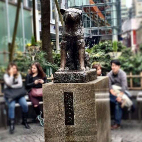 Estátua de Hachikona estação de Shibuya! - Imagem Daiane Veiga.
